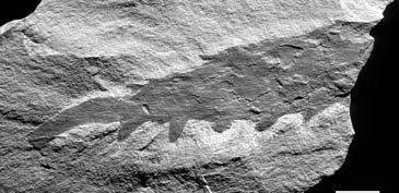 """Murero es el yacimiento Cámbrico conocido como la """"Capilla Sixtina de los trilobites"""""""