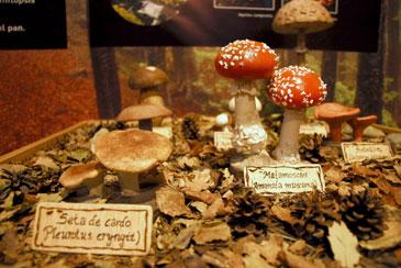 El decreto describe y regula los aprovechamientos micológicos de los montes