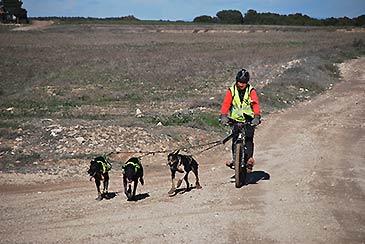 El catalán Miguel Ángel Franco, en categoría bicicleta 1-3 perros