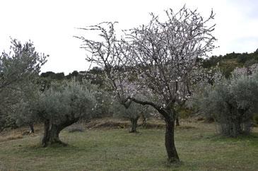 Se han descubierto en parcelas de Sobrarbe, Ribagorza, la Hoya de Huesca y el Somontano