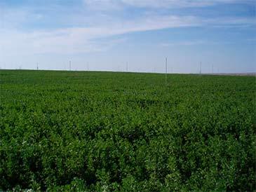 El objetivo del programa es el de mejorar la competitividad del sector agroalimentario aragoné