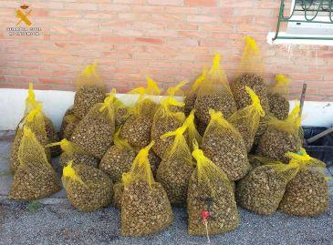 El valor de mercado de estos caracoles ronda los 3.500 euros