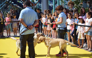 Los escolares han disfrutado de una exhibición de perros guía
