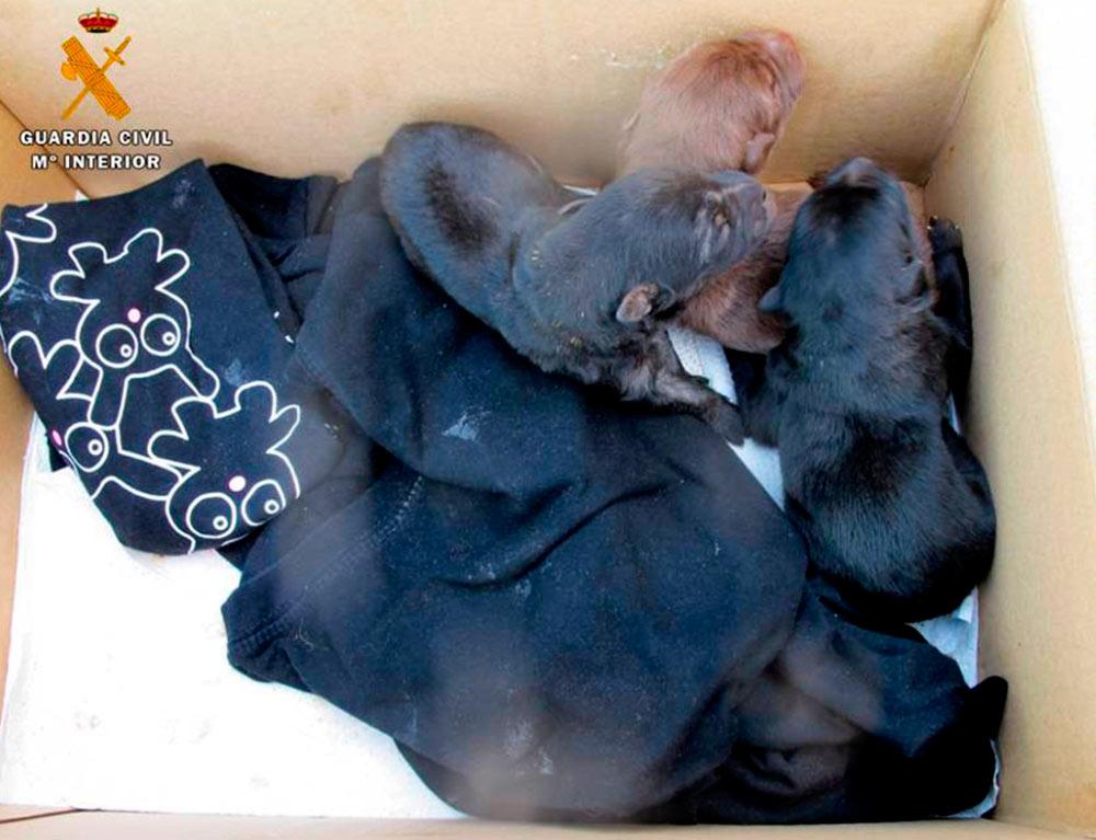 De los cuatro cachorros, uno fue encontrado sin vida y otro falleció al día siguiente