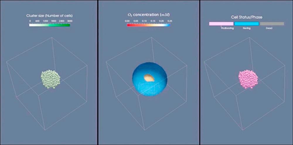 Simulación a ordenador de las células tumorales formando un clúster