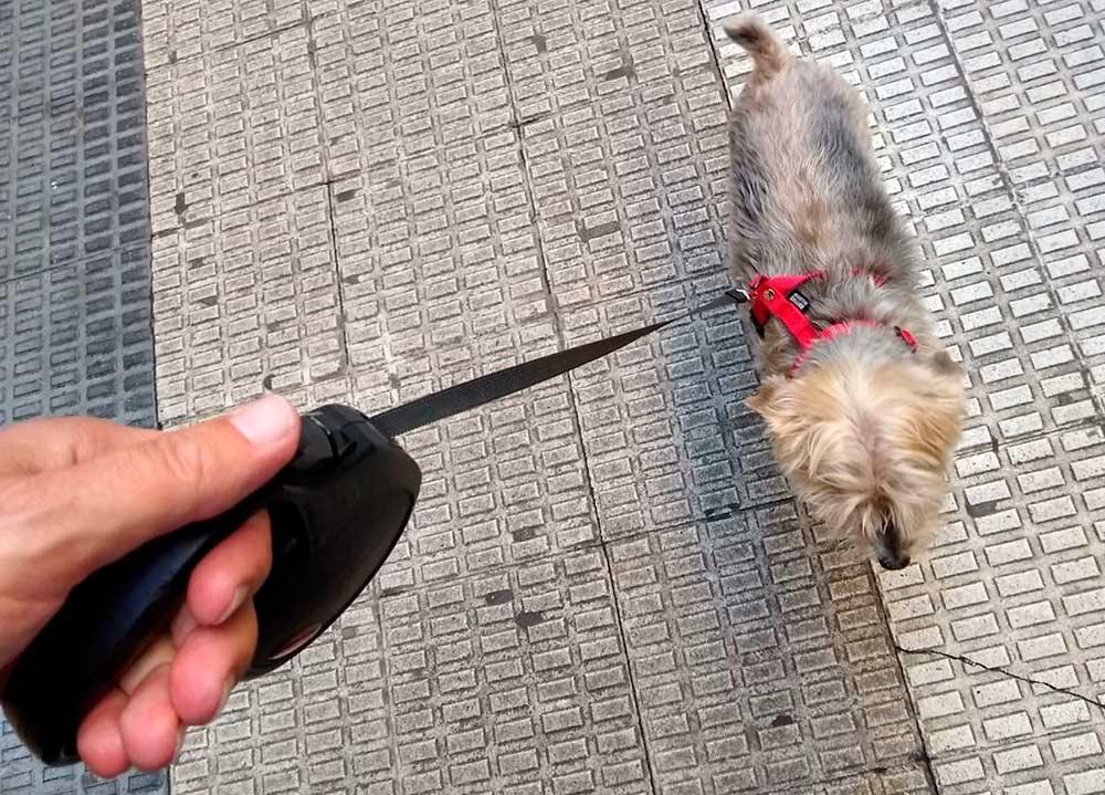 Suárez (PP) ha aprovechado la jornada para pasear con su perro, el Señor Bob